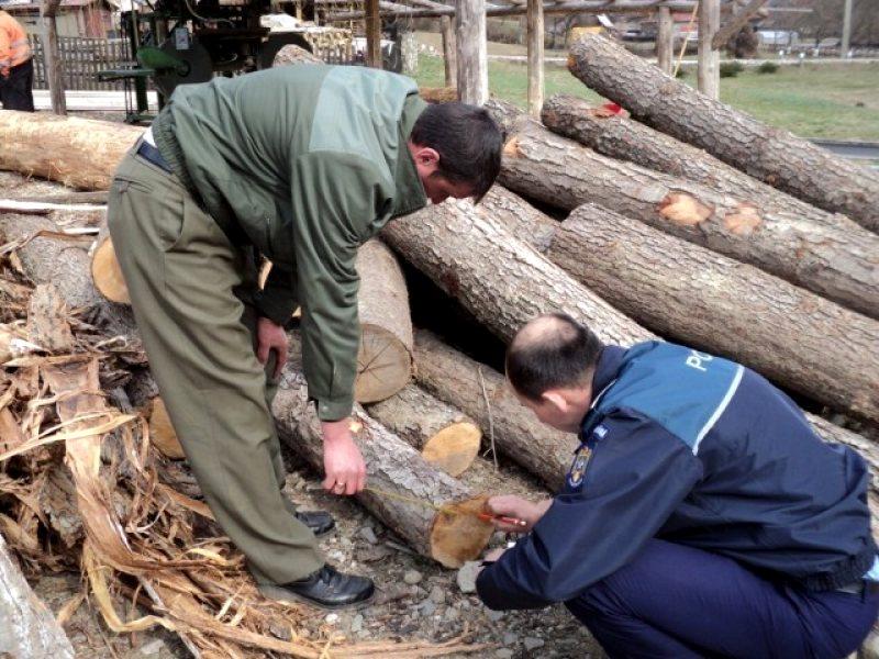 Tăieri ilegale de arbori la Valea Mărului
