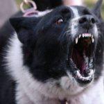 Bărbat sfâșiat de câini la Tecuci