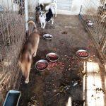 Neregulile constatate de Federația Protecției Animalelor la adăpostul canin din Tecuci